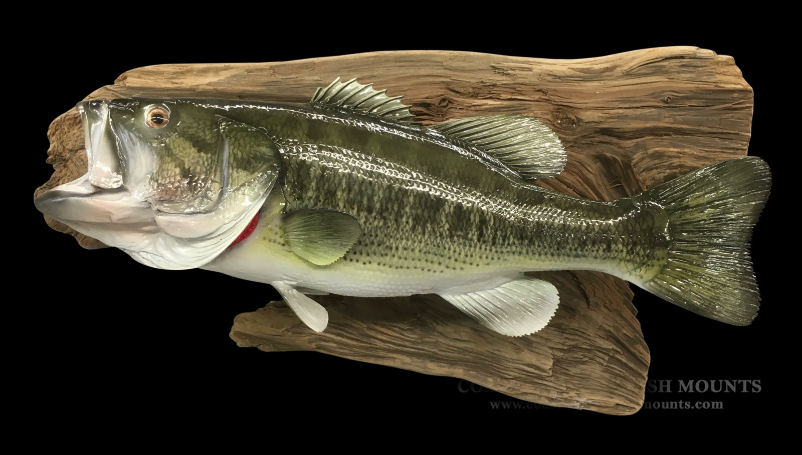 How-Much-Does-It-Cost-To-Mount-Fish-myfishingskill